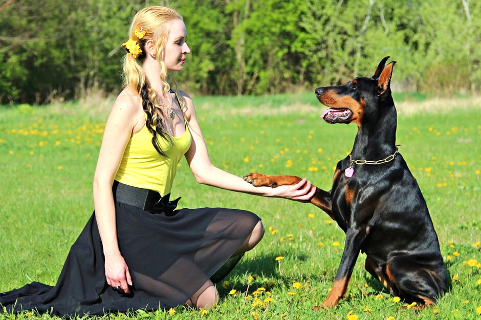 How much does it cost to create dog training app like Puppr?