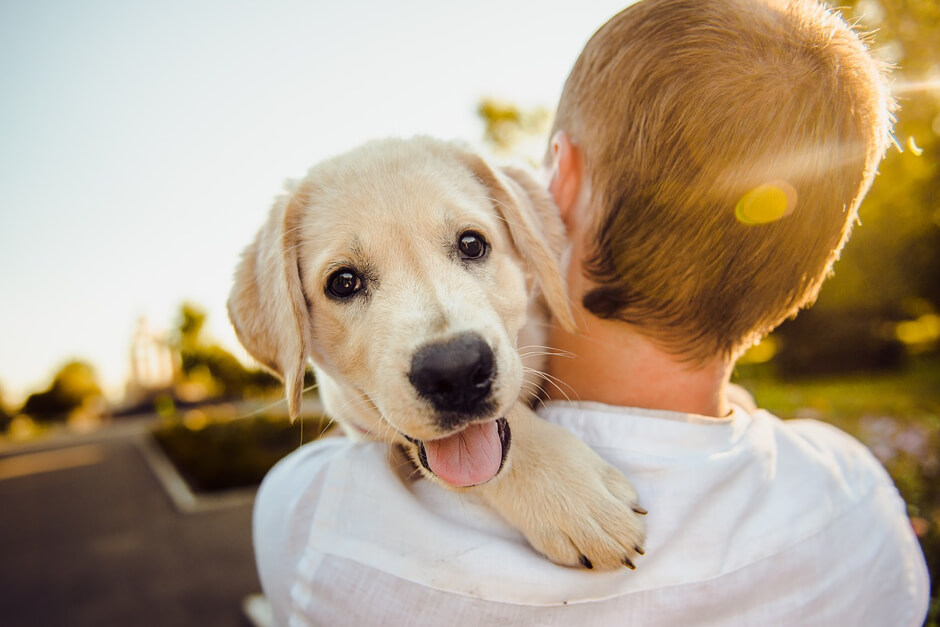How much would it cost to develop a marketplace app for Dog sitters like Rover?