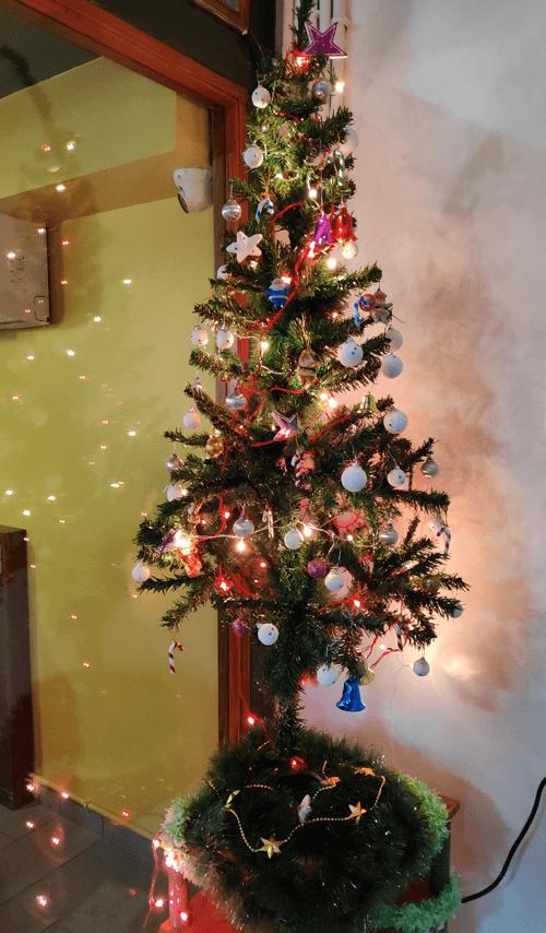 Christmas-Tree-LetsNurture-Ahmedabad